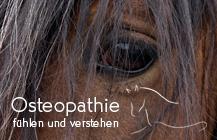 Logodesign, Webdesign, CD<br>Pferdeosteopathie</br>